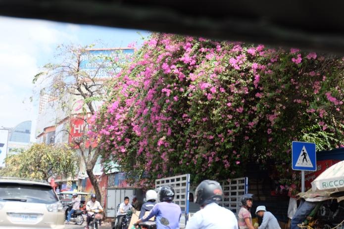 Kambodscha Blüten überall