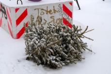 Der Weihnachtsbaum hätte auch nicht mehr geglaubt, dass er noch mal Schnee sieht